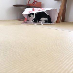 ビタクラフトの福袋ネタバレ2019-3-2