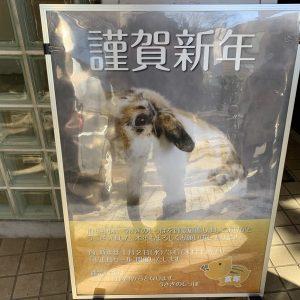 うさぎのしっぽの2019-2020福袋ネタバレ