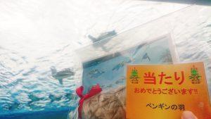 サンシャイン水族館の福袋を公開2020-5-4
